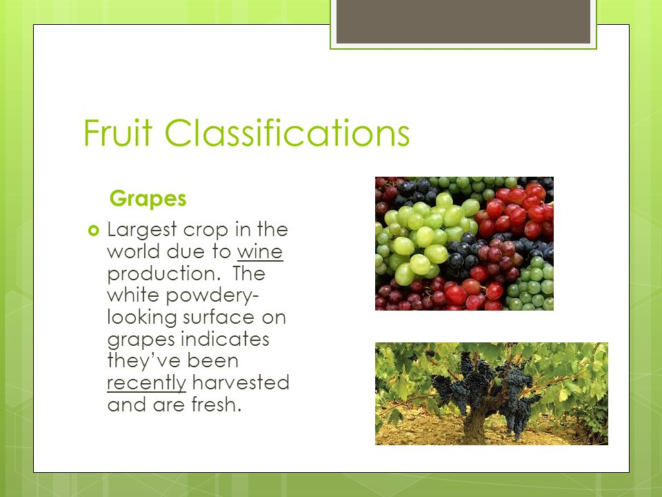 Fruit Classifications Grapes  Largest crop in the world due to wine production.