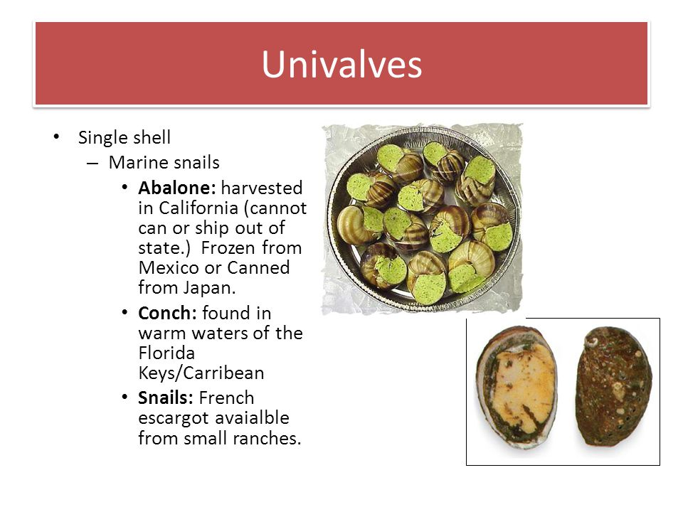 Univalves Single shell – Marine snails Abalone: harvested in California (cannot can or ship out of state.) Frozen from Mexico or Canned from Japan. Co