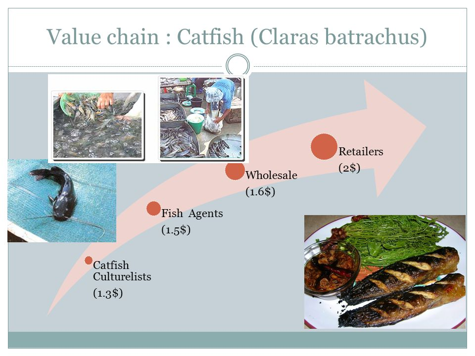 Value chain : Catfish (Claras batrachus) Catfish Culturelists (1.3$) Fish Agents (1.5$) Wholesale (1.6$) Retailers (2$)