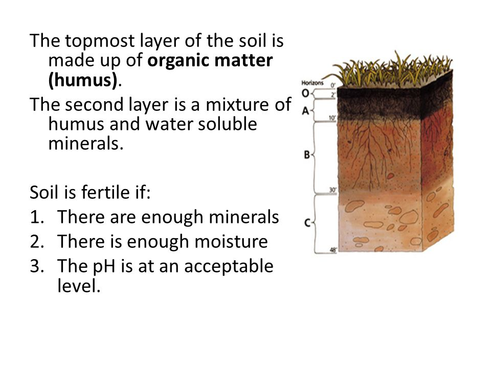 The topmost layer of the soil is made up of organic matter (humus).