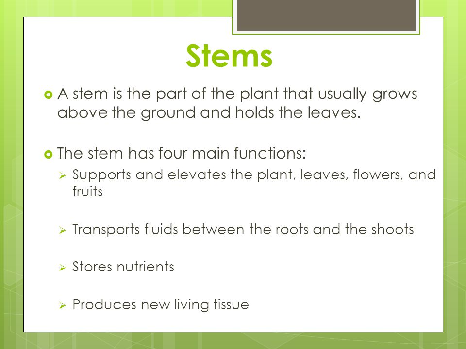 Stems  A stem is the part of the plant that usually grows above the ground and holds the leaves.  The stem has four main functions:  Supports and e