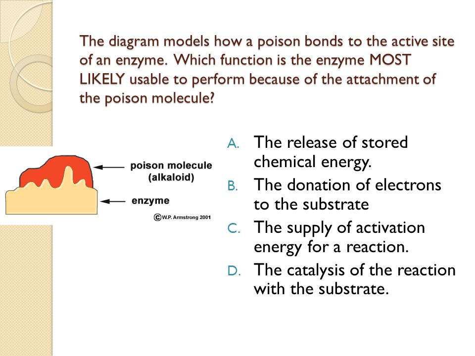 The diagram models how a poison bonds to the active site of an enzyme. Which function is the enzyme MOST LIKELY usable to perform because of the attac