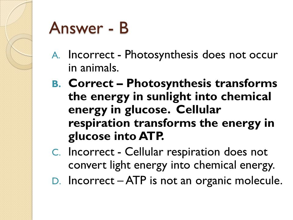 Answer - B A. Incorrect - Photosynthesis does not occur in animals. B. Correct – Photosynthesis transforms the energy in sunlight into chemical energy