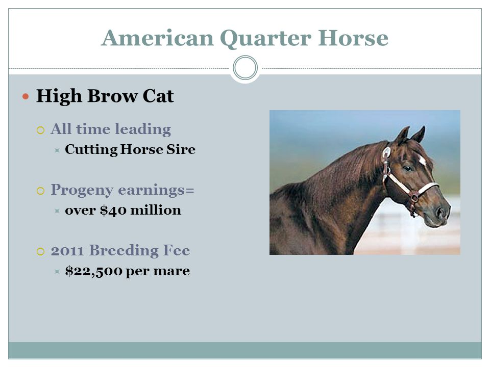 American Quarter Horse High Brow Cat  All time leading  Cutting Horse Sire  Progeny earnings=  over $40 million  2011 Breeding Fee  $22,500 per mare