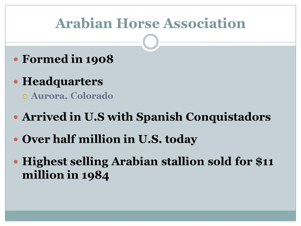 Arabian Horse Association Formed in 1908 Headquarters  Aurora, Colorado Arrived in U.S with Spanish Conquistadors Over half million in U.S.