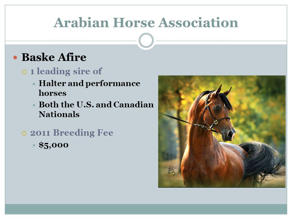 Arabian Horse Association Baske Afire  1 leading sire of  Halter and performance horses  Both the U.S.
