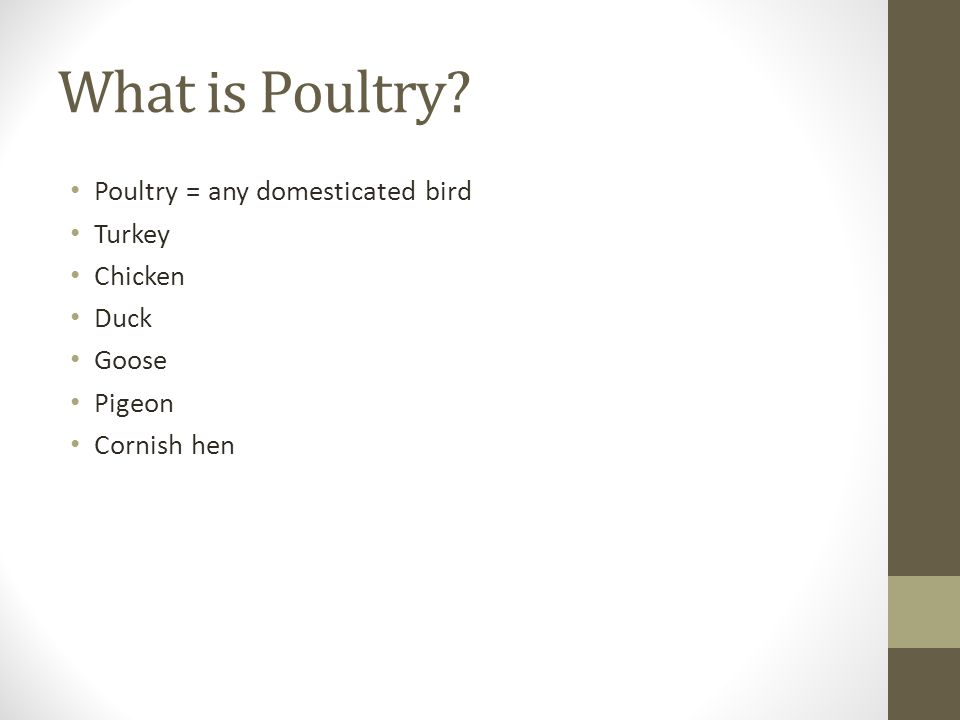 What is Poultry Poultry = any domesticated bird Turkey Chicken Duck Goose Pigeon Cornish hen