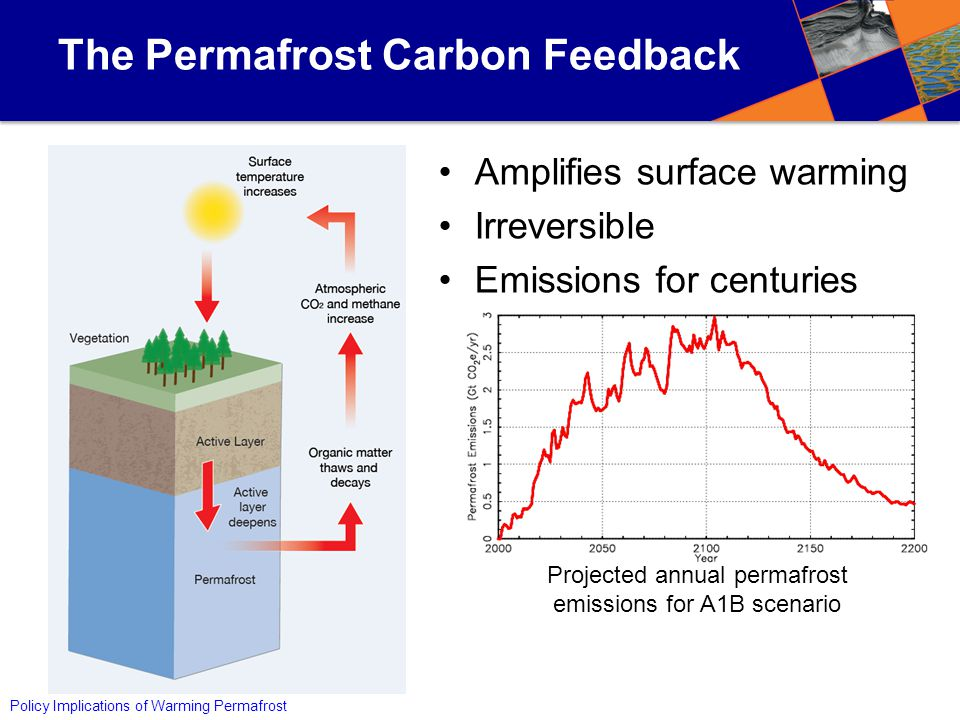Policy Implications of Warming Permafrost The Permafrost Carbon Feedback Amplifies surface warming Irreversible Emissions for centuries Projected annual permafrost emissions for A1B scenario