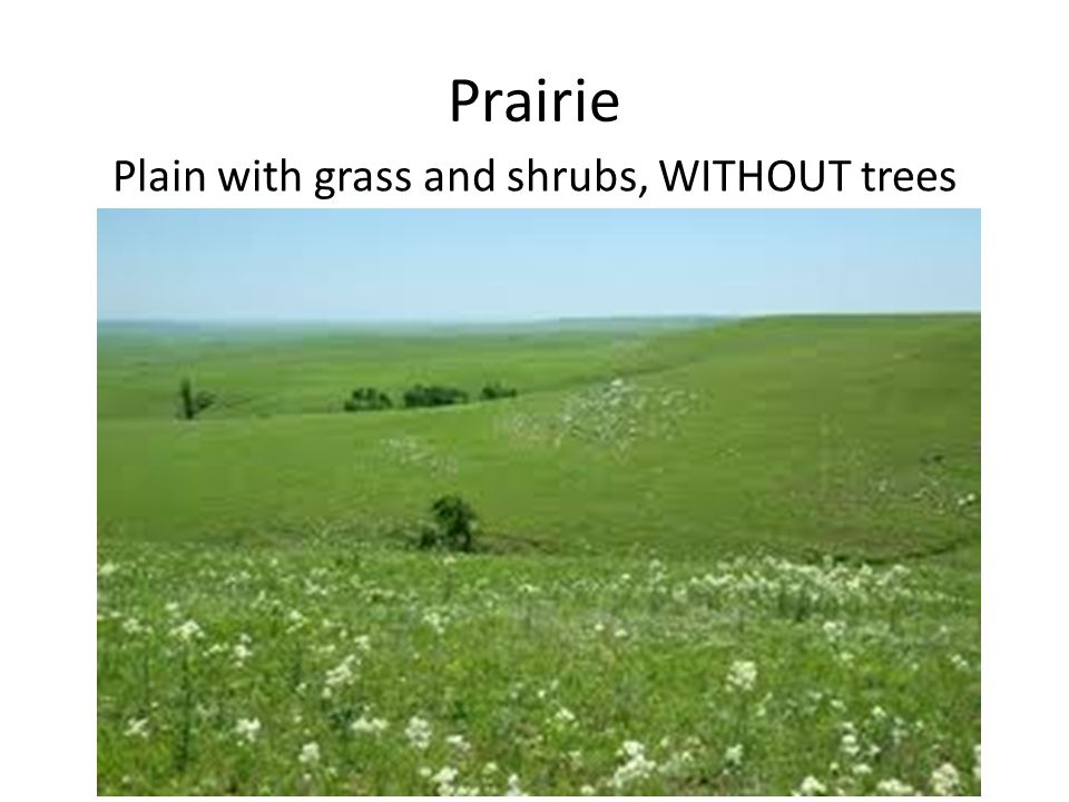 Prairie Plain with grass and shrubs, WITHOUT trees