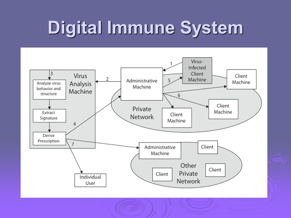 Digital Immune System