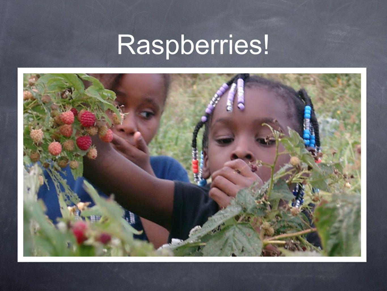 How do raspberries grow.Farmers grow raspberries on vines.