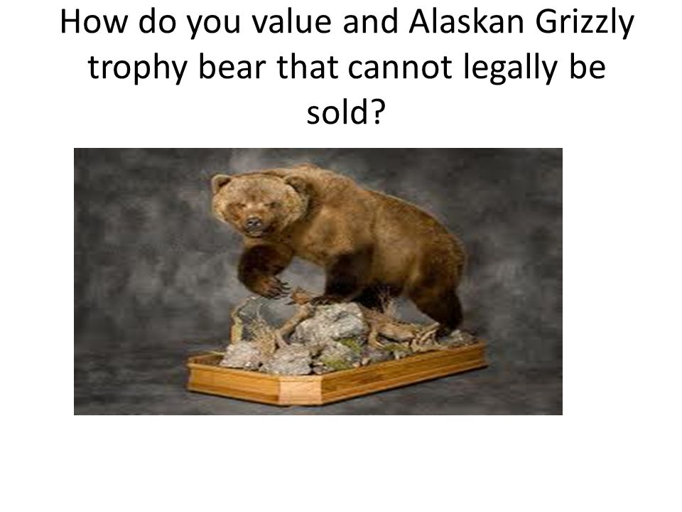 How do you value and Alaskan Grizzly trophy bear that cannot legally be sold