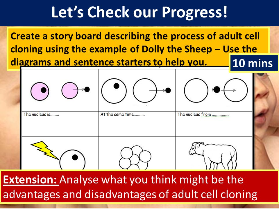 Let's Check our Progress! Create a story board describing the process of adult cell cloning using the example of Dolly the Sheep – Use the diagrams an