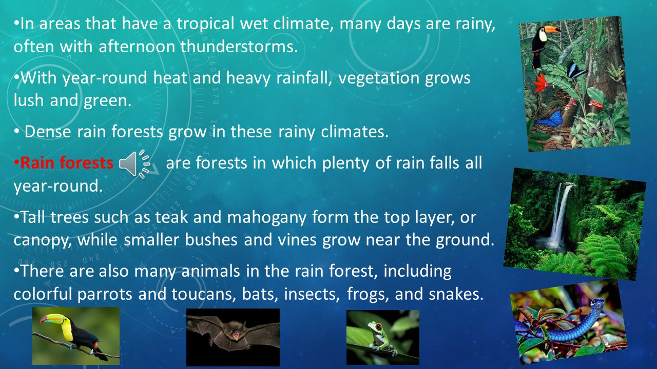 The tropics have two types of rainy climates: tropical wet and tropical wet-and-dry. Tropical wet climates are found in low-lying lands near the equat