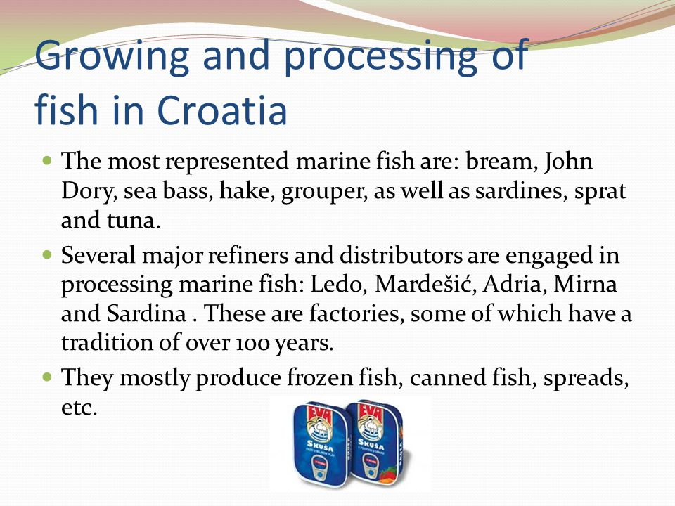 Growing and processing of fish in Croatia The most represented marine fish are: bream, John Dory, sea bass, hake, grouper, as well as sardines, sprat and tuna.