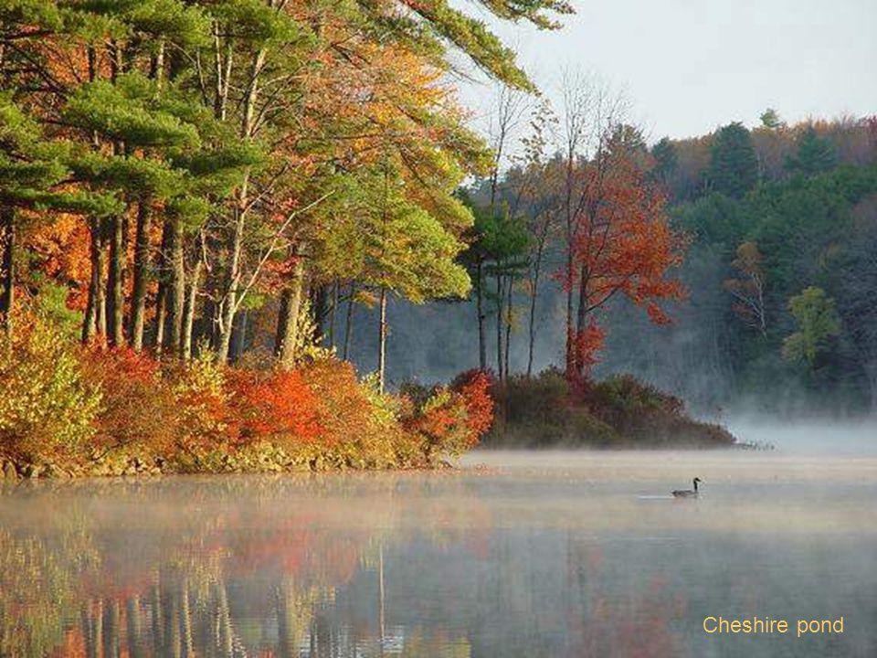 Cheshire pond