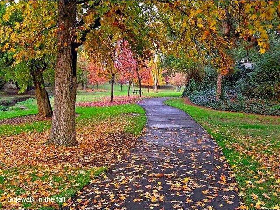 Sidewalk in the fall
