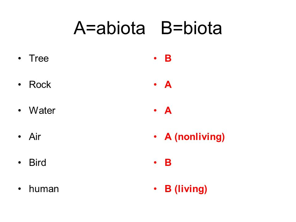 A=abiota B=biota Tree Rock Water Air Bird human B A A A (nonliving) B B (living)