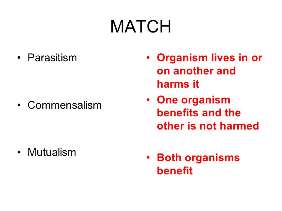MATCH Parasitism Commensalism Mutualism Organism lives in or on another and harms it One organism benefits and the other is not harmed Both organisms