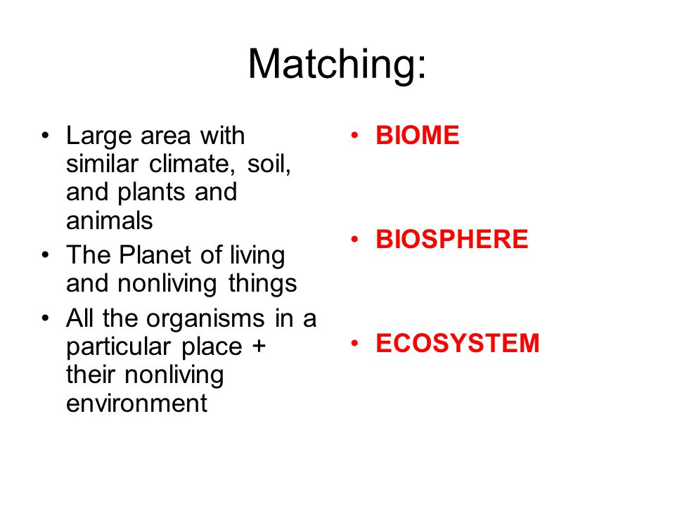 What is the difference between photosynthesis and chemosynthesis.