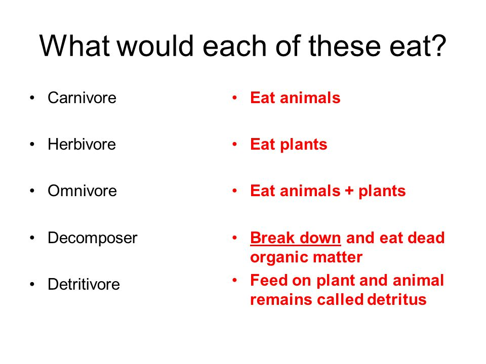 What would each of these eat? Carnivore Herbivore Omnivore Decomposer Detritivore Eat animals Eat plants Eat animals + plants Break down and eat dead