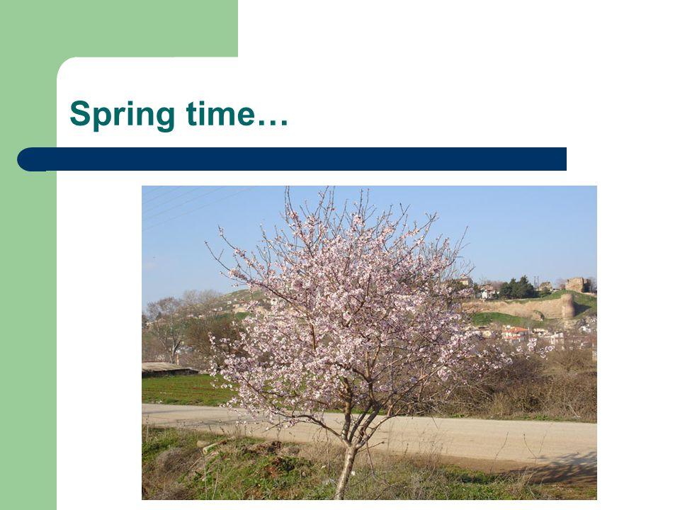 Spring time…
