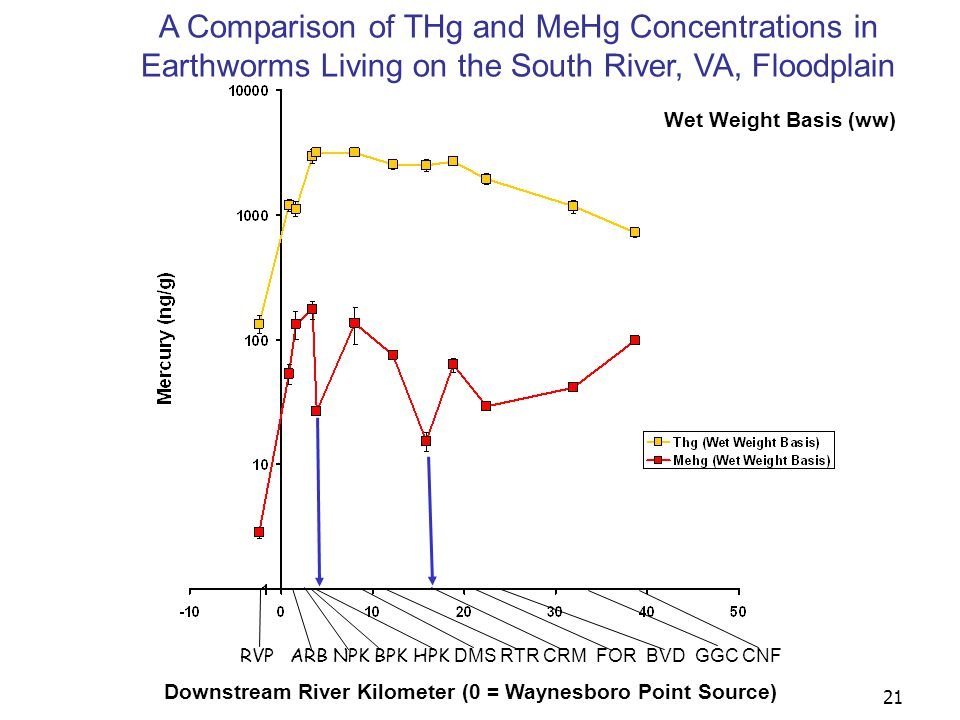 21 Downstream River Kilometer (0 = Waynesboro Point Source) RVP ARB NPK BPK HPK DMS RTR CRM FOR BVD GGC CNF A Comparison of THg and MeHg Concentrations in Earthworms Living on the South River, VA, Floodplain Wet Weight Basis (ww)