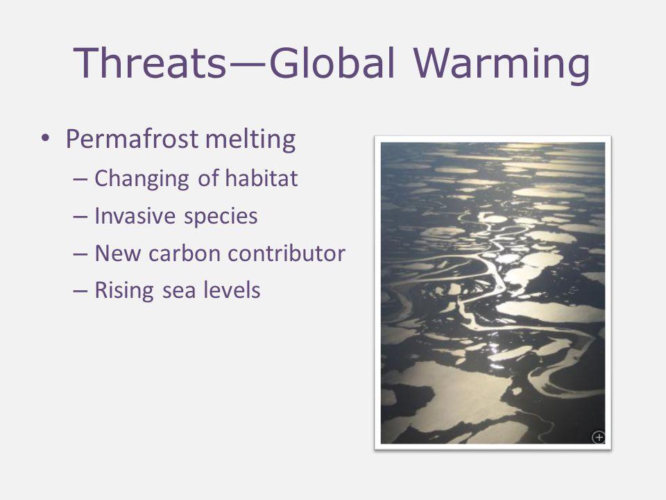 Threats—Human Disturbance Air pollutants—DDT and PCB Oil and gas development – Roads create heat – Tire tracks