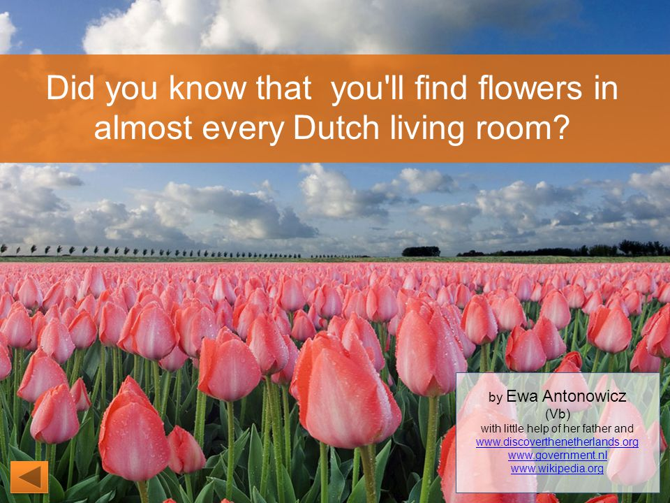 Did you know that you ll find flowers in almost every Dutch living room.