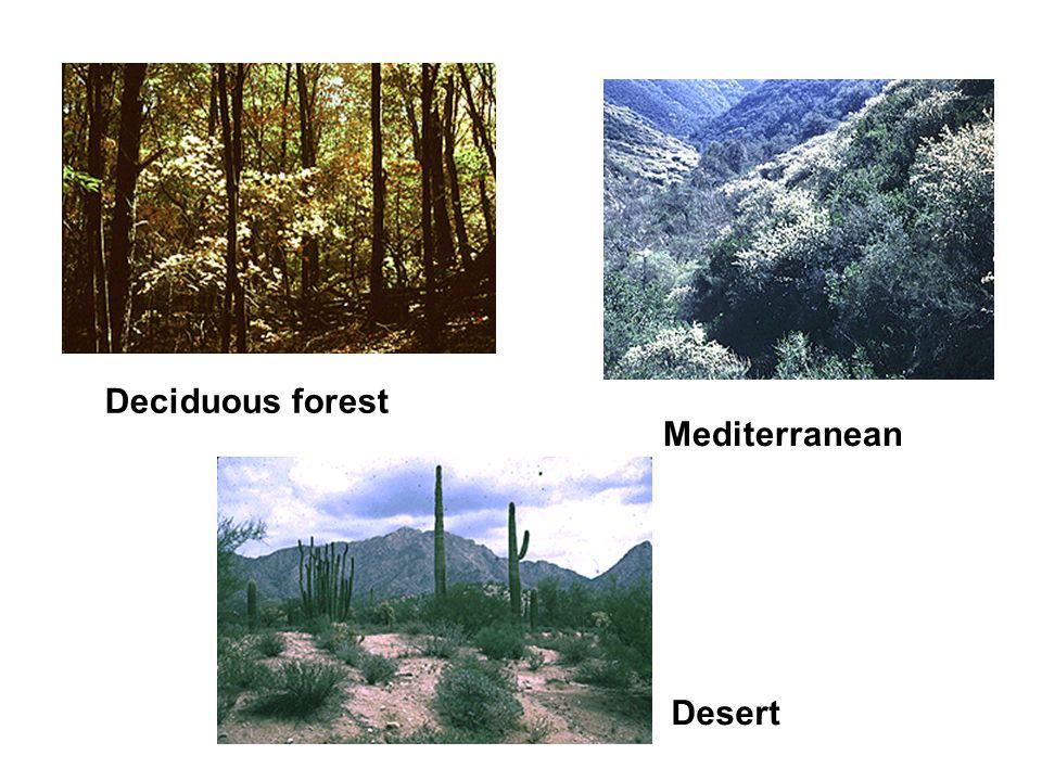 Desert Mediterranean Deciduous forest