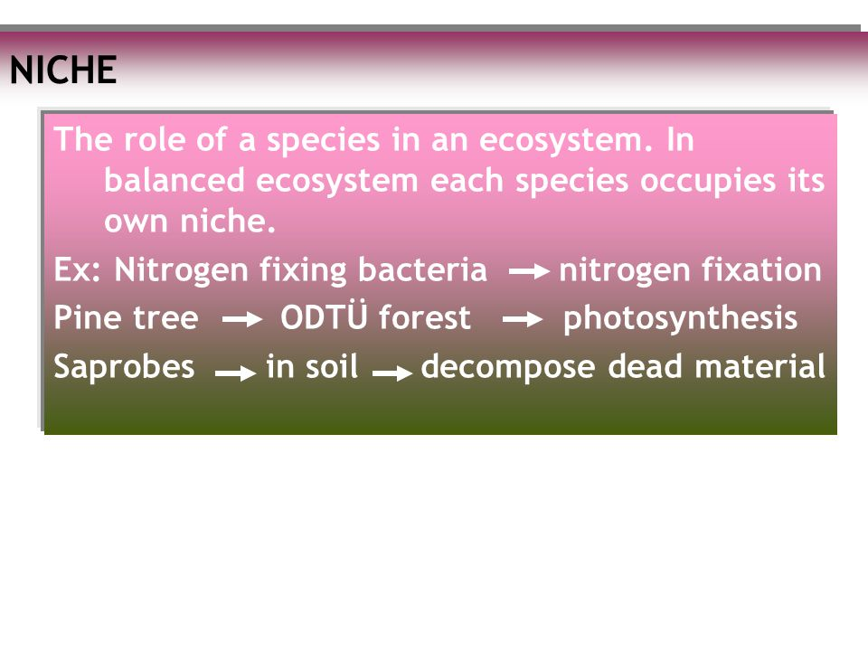 NICHE The role of a species in an ecosystem. In balanced ecosystem each species occupies its own niche. Ex: Nitrogen fixing bacteria nitrogen fixation