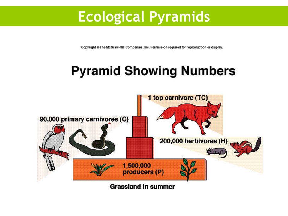 Ecological Pyramids