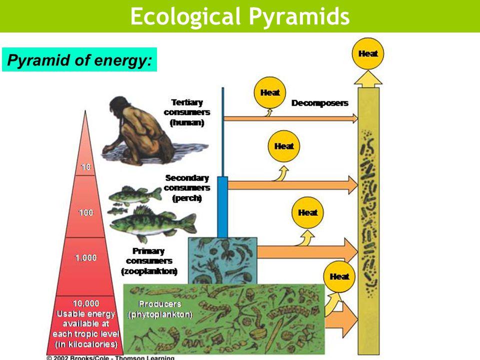 Ecological Pyramids Pyramid of energy: