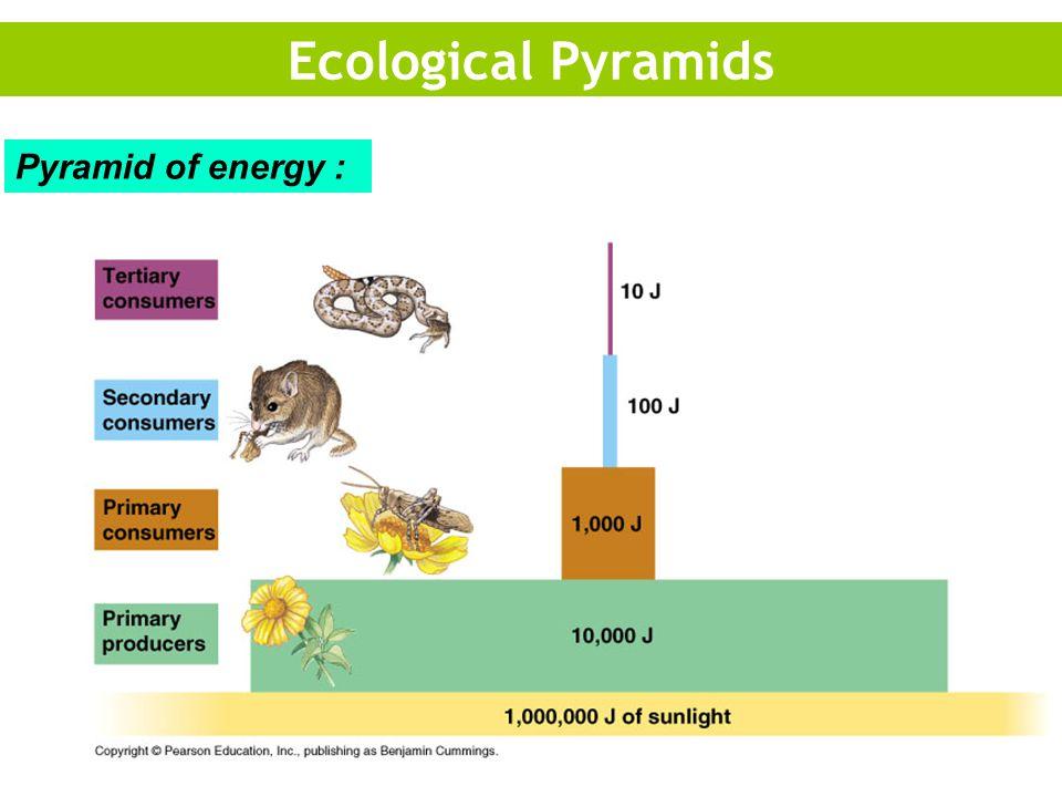 Ecological Pyramids Pyramid of energy :