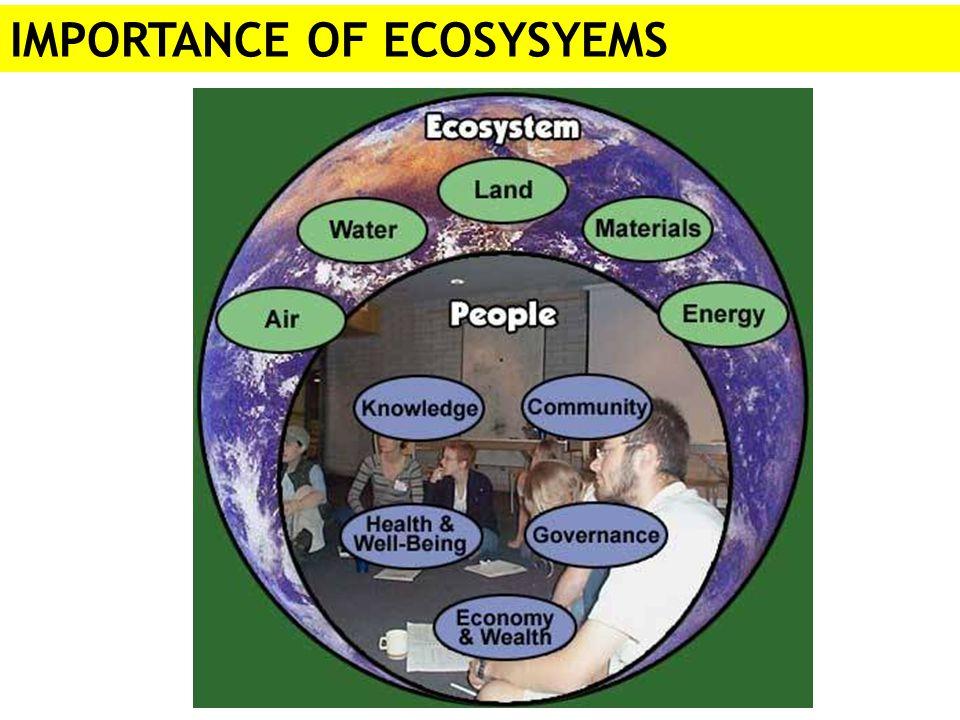 IMPORTANCE OF ECOSYSYEMS