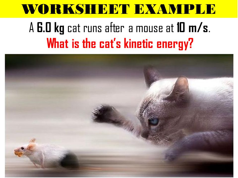 WORKSHEET EXAMPLE A 6.0 kg cat runs after a mouse at 10 m/s. What is the cat's kinetic energy