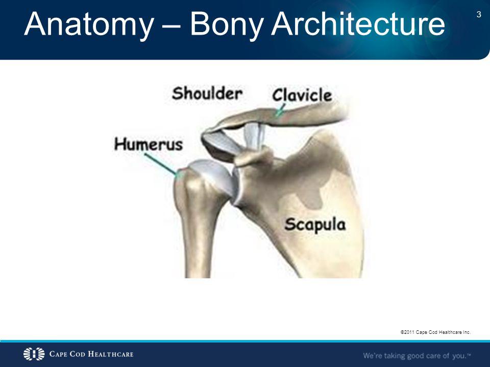 Anatomy – Bony Architecture ©2011 Cape Cod Healthcare Inc. 3
