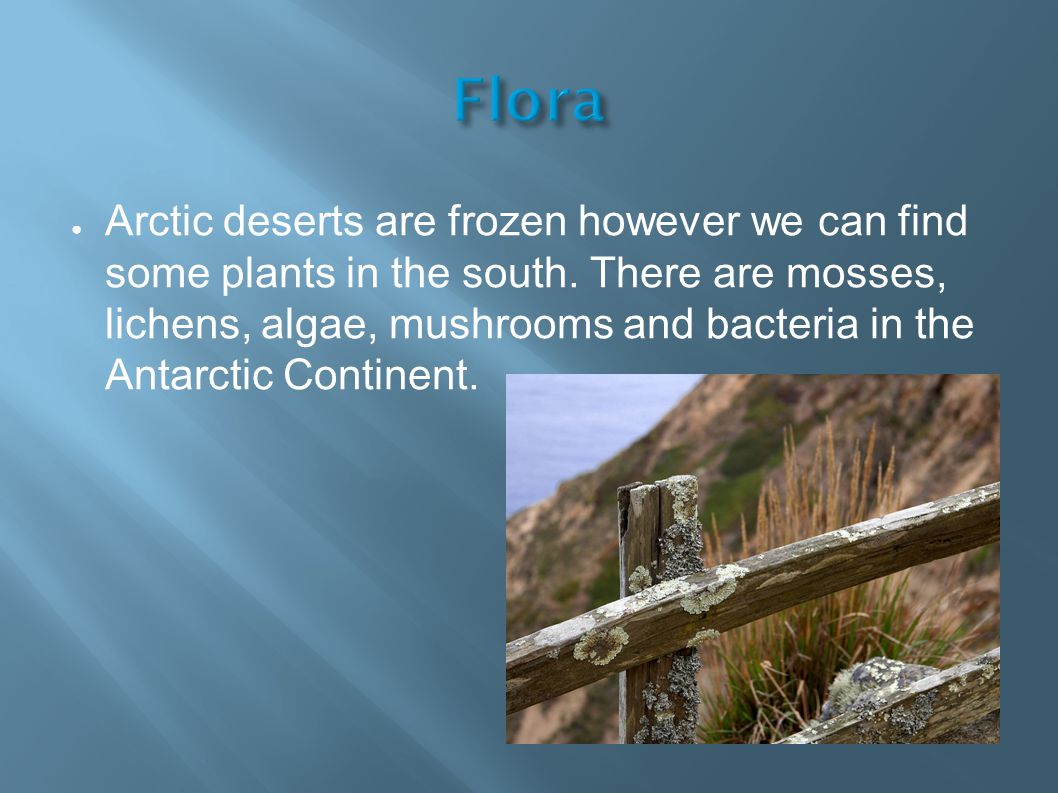 ● Arctic deserts are frozen however we can find some plants in the south.