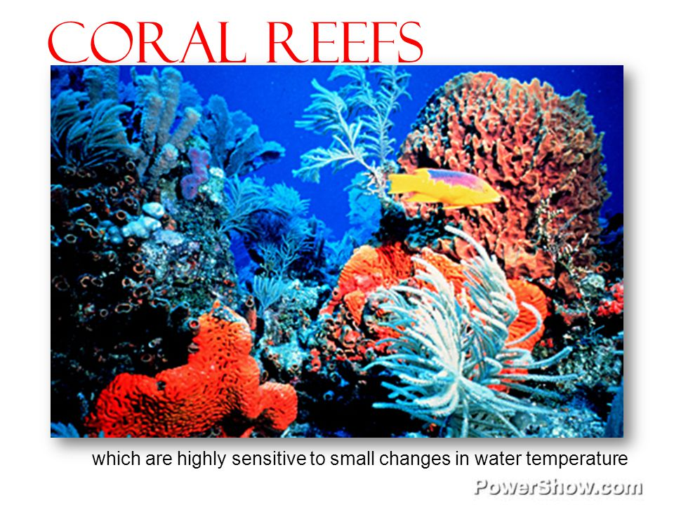 Coral reefs which are highly sensitive to small changes in water temperature