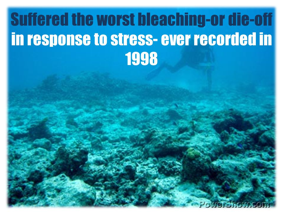 Suffered the worst bleaching-or die-off in response to stress- ever recorded in 1998