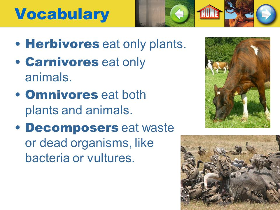 Vocabulary Producers make their food from the energy of sunlight or chemicals in nature. This food can be used by many other organisms. Consumers cann