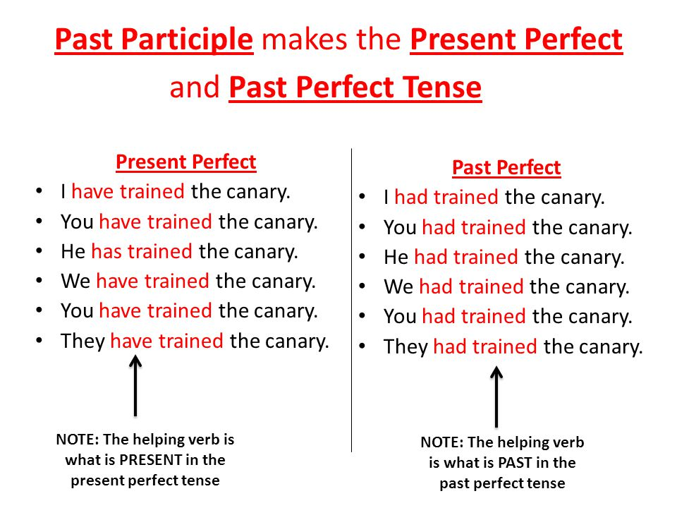 Past Participle makes the Present Perfect Tense Singular I have called the dog to dinner.