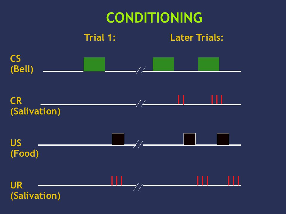 CS (Bell) CR (Salivation) US (Food) UR (Salivation) CONDITIONING Trial 1:Later Trials: