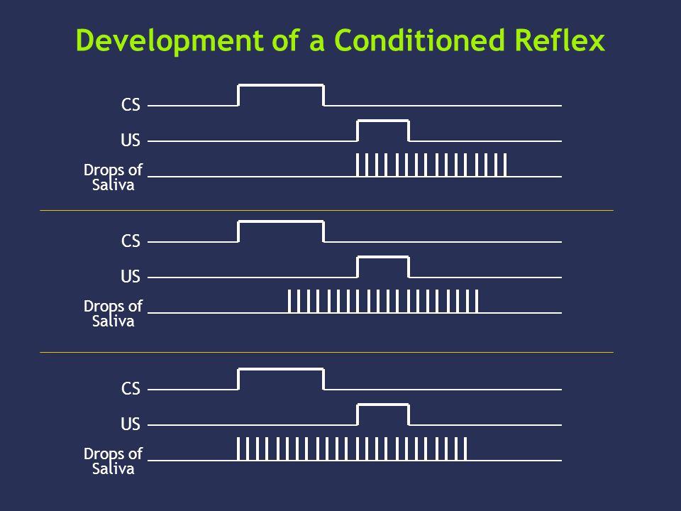 Development of a Conditioned Reflex CS US Drops of Saliva CS US Drops of Saliva CS US Drops of Saliva