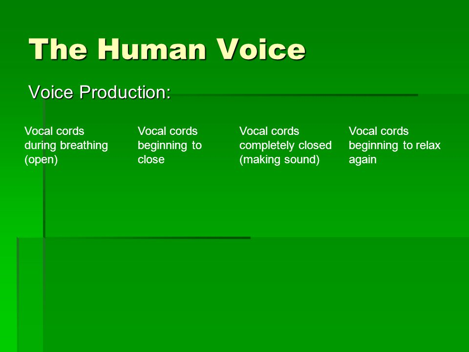 The Human Voice Voice Production: Vocal cords during breathing (open) Vocal cords beginning to close Vocal cords completely closed (making sound) Vocal cords beginning to relax again