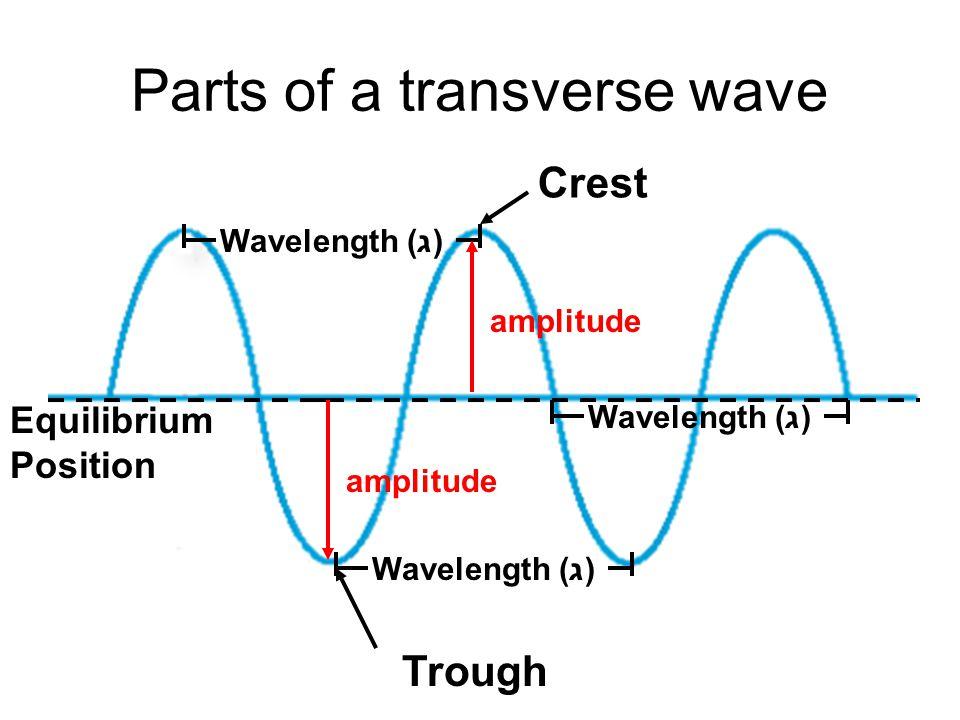 Parts of a transverse wave Crest Trough Equilibrium Position Wavelength (ג) amplitude