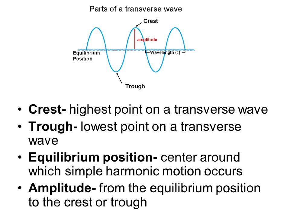 Crest- highest point on a transverse wave Trough- lowest point on a transverse wave Equilibrium position- center around which simple harmonic motion occurs Amplitude- from the equilibrium position to the crest or trough