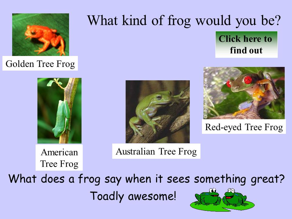 Comparing Frogs