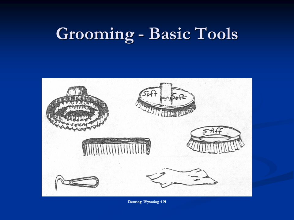 Grooming - Basic Tools Drawing: Wyoming 4-H