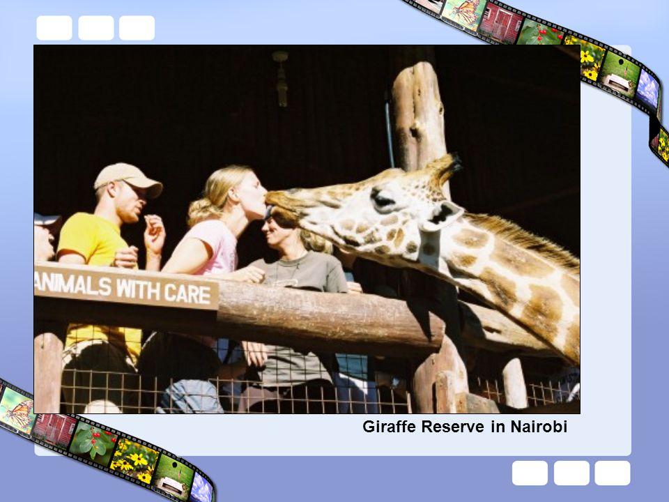 Giraffe Reserve in Nairobi